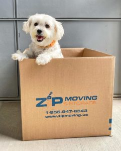 moving with a dog